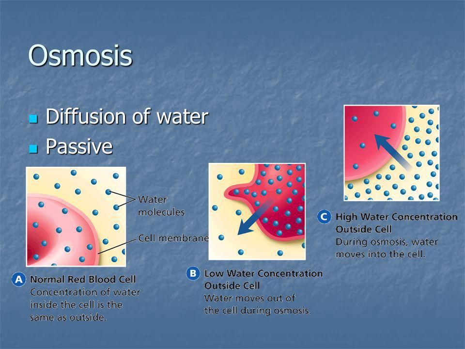 Osmosis Diffusion of water Diffusion of water Passive Passive