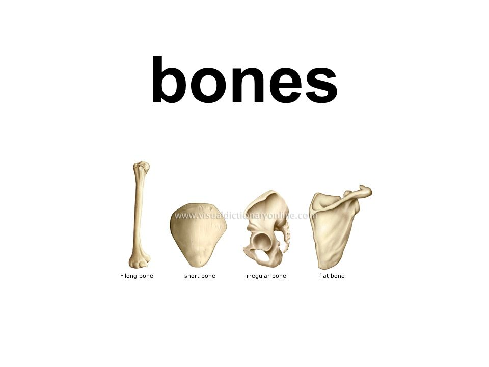major material used in mineralization of bones and shells
