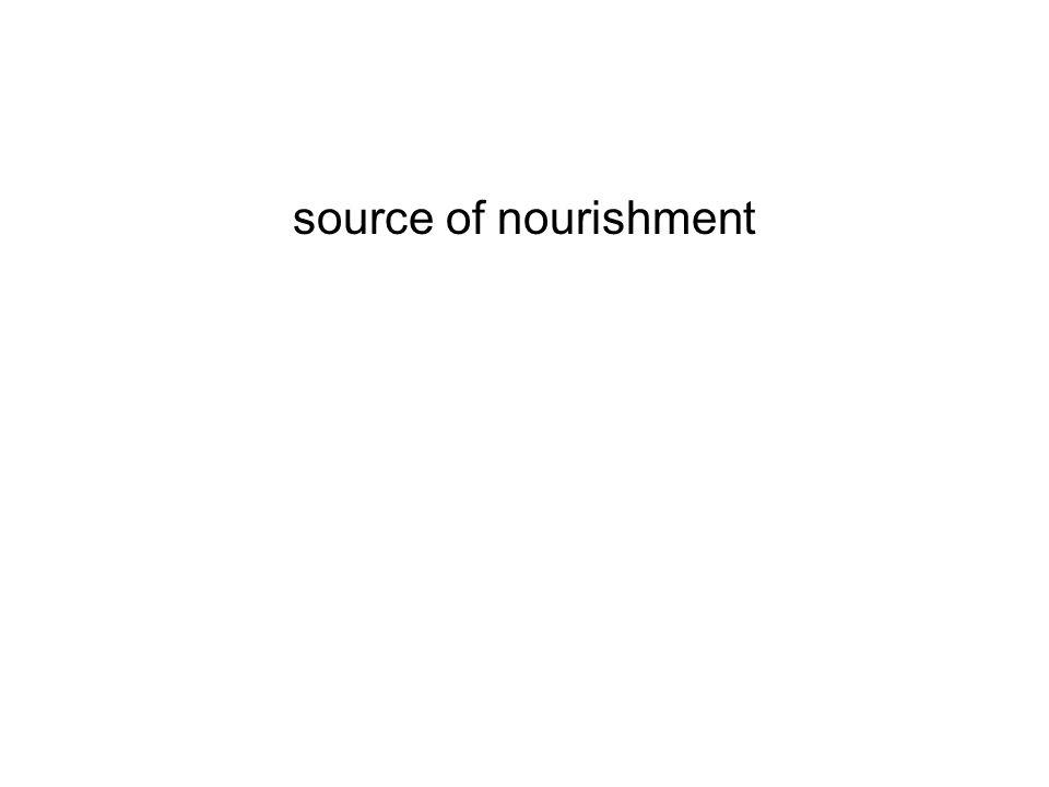 source of nourishment