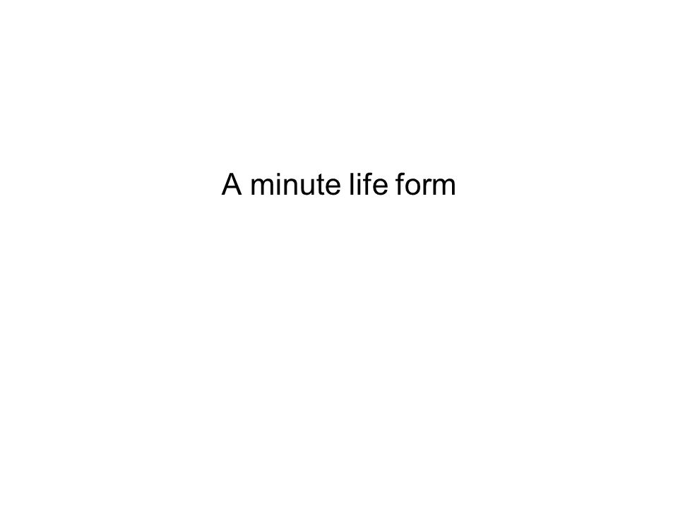 A minute life form