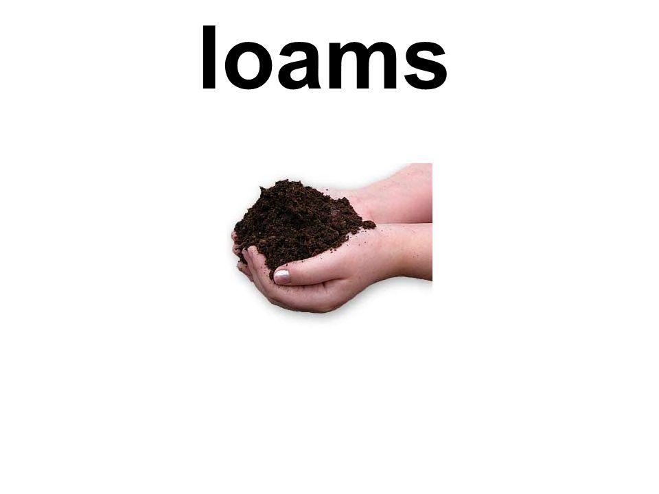 loams