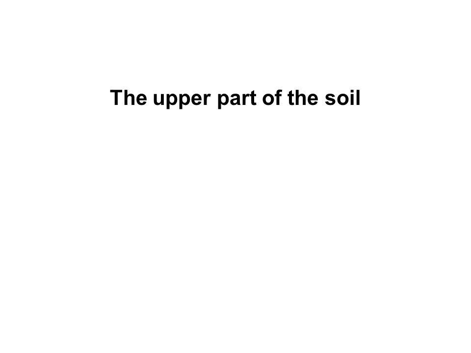 The upper part of the soil