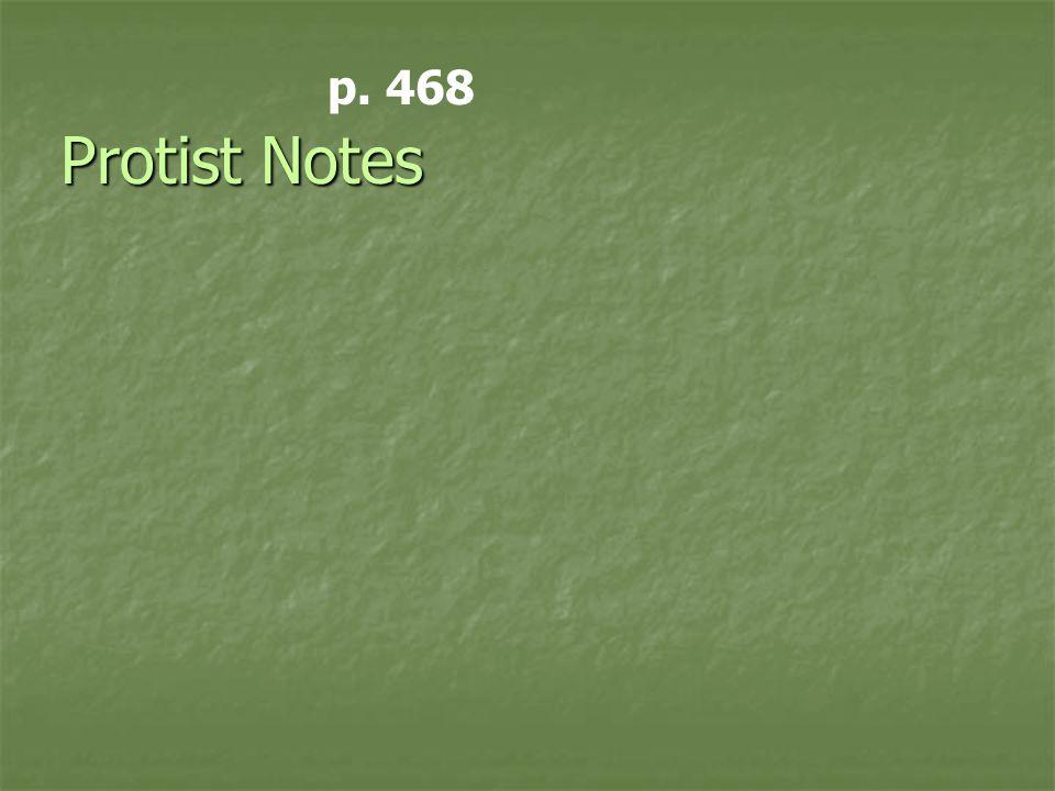 Protist Notes p. 468