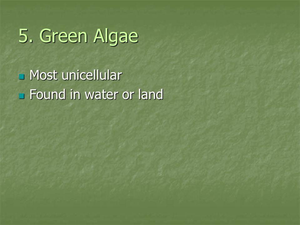 5. Green Algae Most unicellular Most unicellular Found in water or land Found in water or land