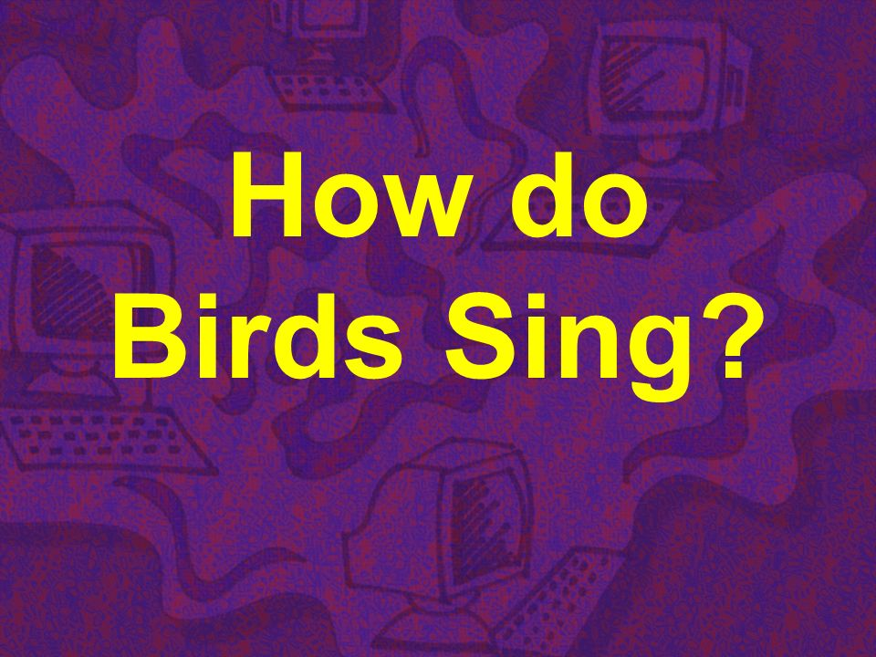 How do Birds Sing?