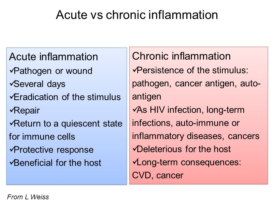 Acute vs chronic inflammation Acute inflammation Pathogen or wound Several days Eradication of the stimulus Repair Return to a quiescent state for imm