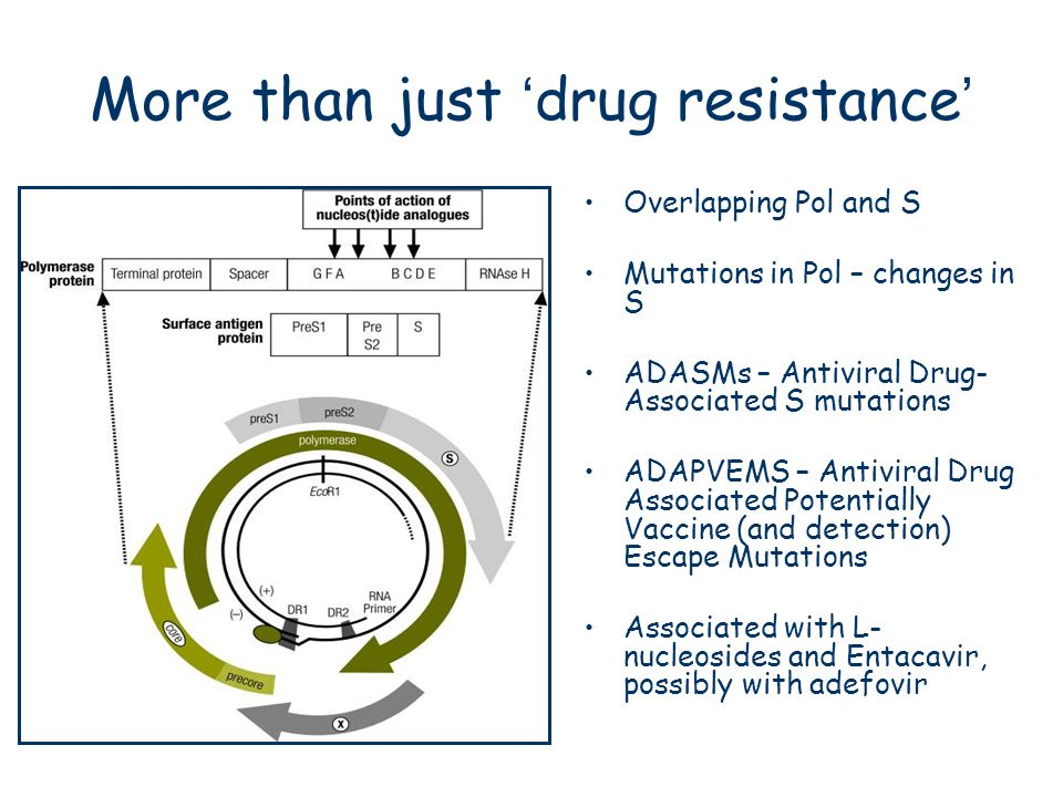 More than just drug resistance Overlapping Pol and S Mutations in Pol – changes in S ADASMs – Antiviral Drug- Associated S mutations ADAPVEMS – Antivi