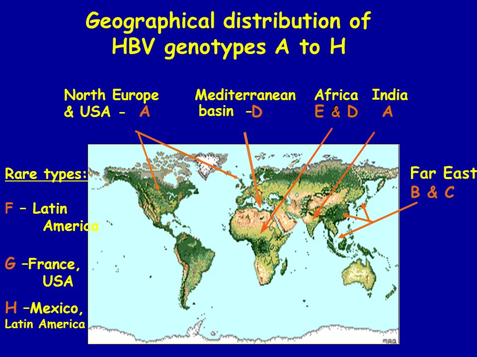 Geographical distribution of HBV genotypes A to H North Europe & USA - A Mediterranean basin- D Africa E & D India A A Rare types: F – Latin America G –France, USA H –Mexico, Latin America Far East B & C