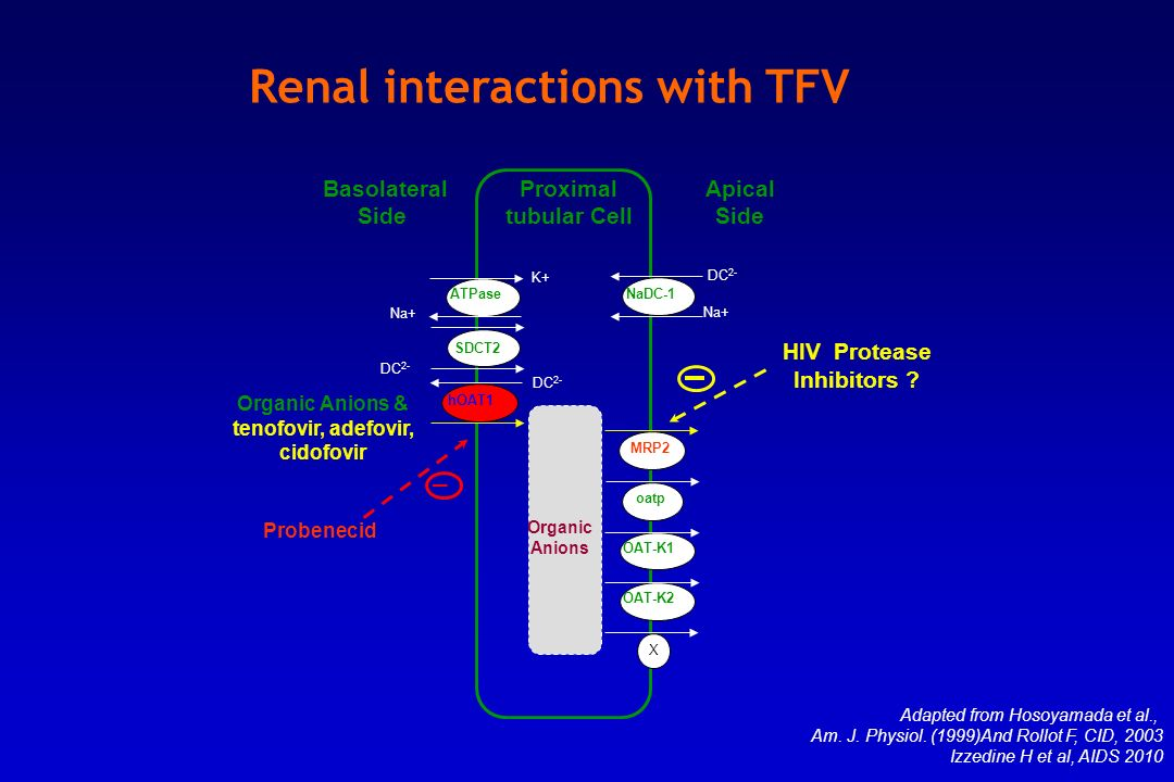 Adapted from Hosoyamada et al., Am. J. Physiol. (1999)And Rollot F, CID, 2003 Izzedine H et al, AIDS 2010 Renal interactions with TFV K+ ATPase SDCT2