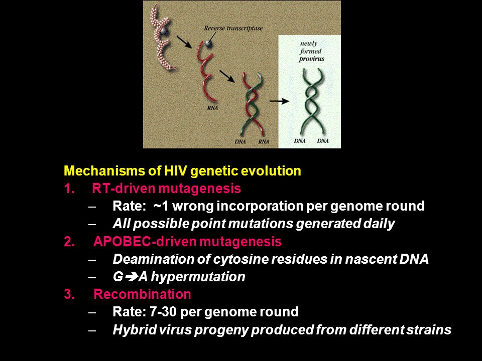 Mechanisms of HIV genetic evolution 1.RT-driven mutagenesis –Rate: ~1 wrong incorporation per genome round –All possible point mutations generated daily 2.