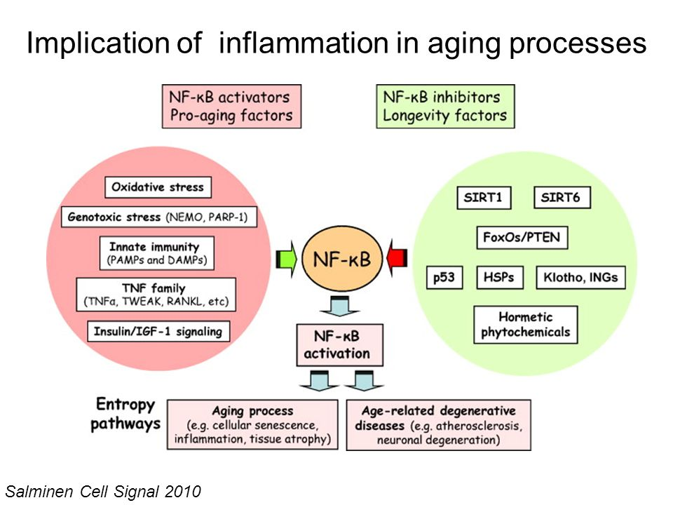 Implication of inflammation in aging processes Salminen Cell Signal 2010