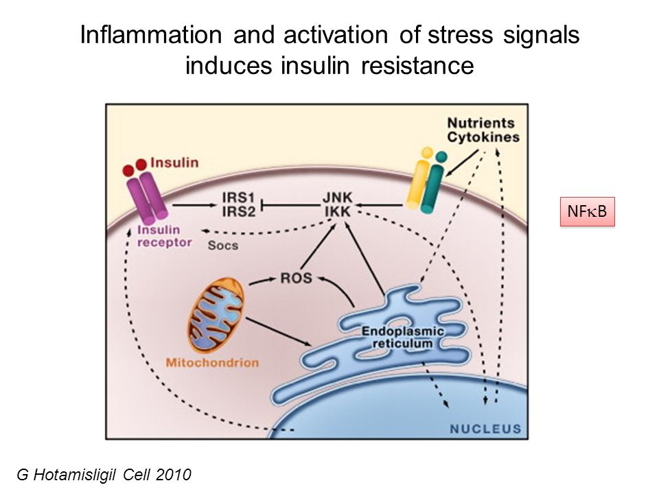 Inflammation and activation of stress signals induces insulin resistance G Hotamisligil Cell 2010 NF B