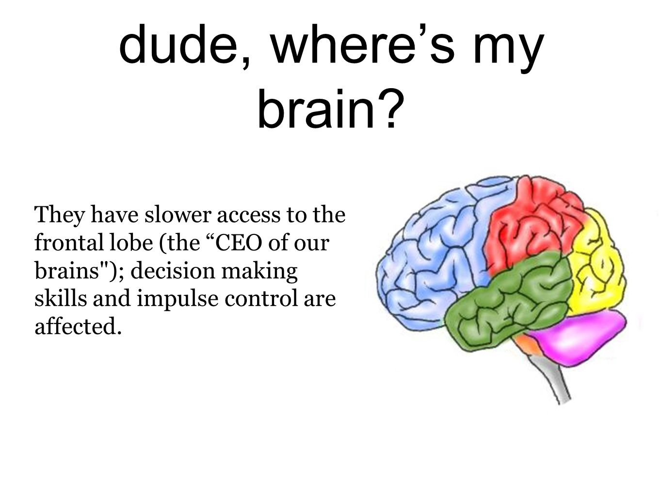 dude, wheres my brain? They have slower access to the frontal lobe (the CEO of our brains