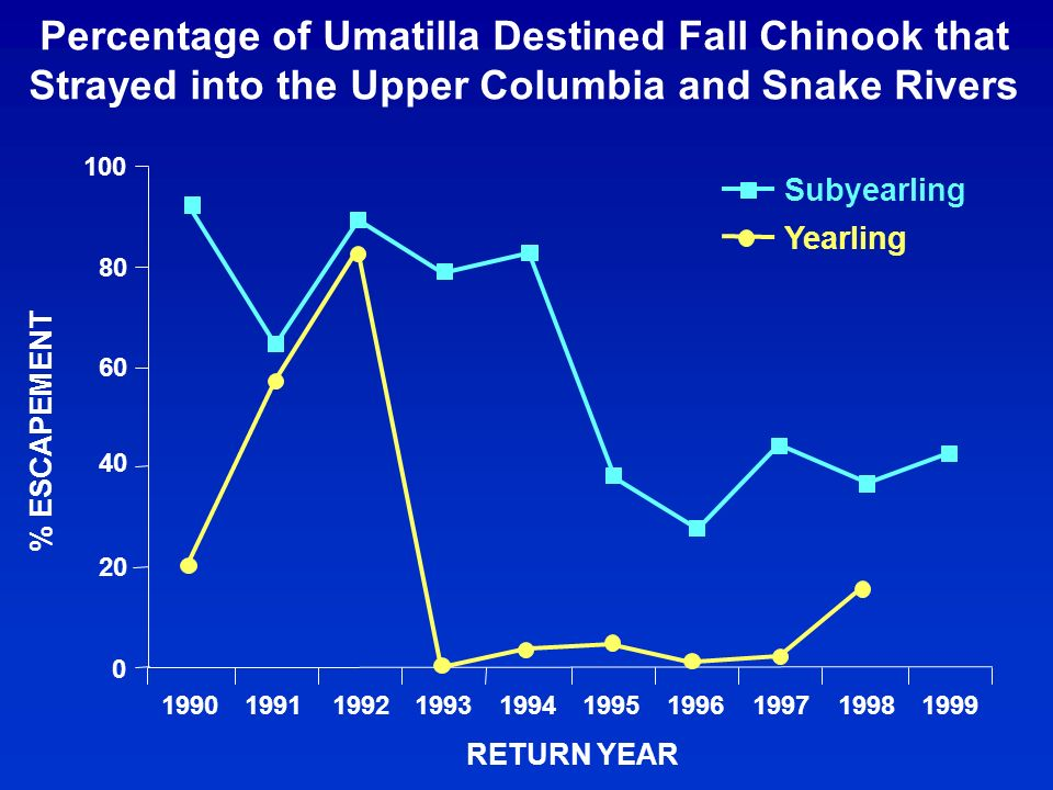 Percentage of Umatilla Destined Fall Chinook that Strayed into the Upper Columbia and Snake Rivers 0 20 40 60 80 100 1990199119921993199419951996199719981999 RETURN YEAR % ESCAPEMENT Subyearling Yearling