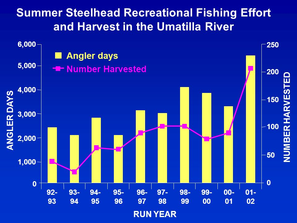 Summer Steelhead Recreational Fishing Effort and Harvest in the Umatilla River 0 6,000 92- 93 93- 94 94- 95 95- 96 96- 97 97- 98 98- 99 99- 00 00- 01 01- 02 RUN YEAR ANGLER DAYS 0 50 100 150 200 250 NUMBER HARVESTED Angler days Number Harvested 5,000 4,000 3,000 2,000 1,000
