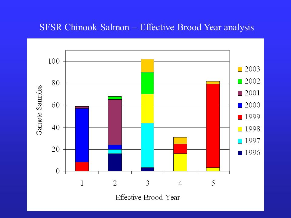 SFSR Chinook Salmon – Effective Brood Year analysis