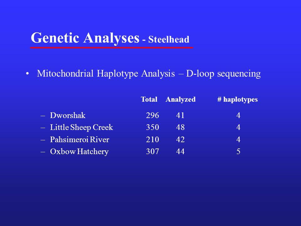 Genetic Analyses - Steelhead Mitochondrial Haplotype Analysis – D-loop sequencing –Dworshak 296414 –Little Sheep Creek350484 –Pahsimeroi River210424 –