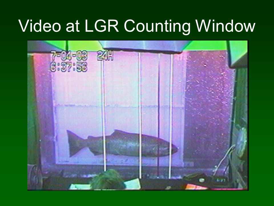 Video at LGR Counting Window