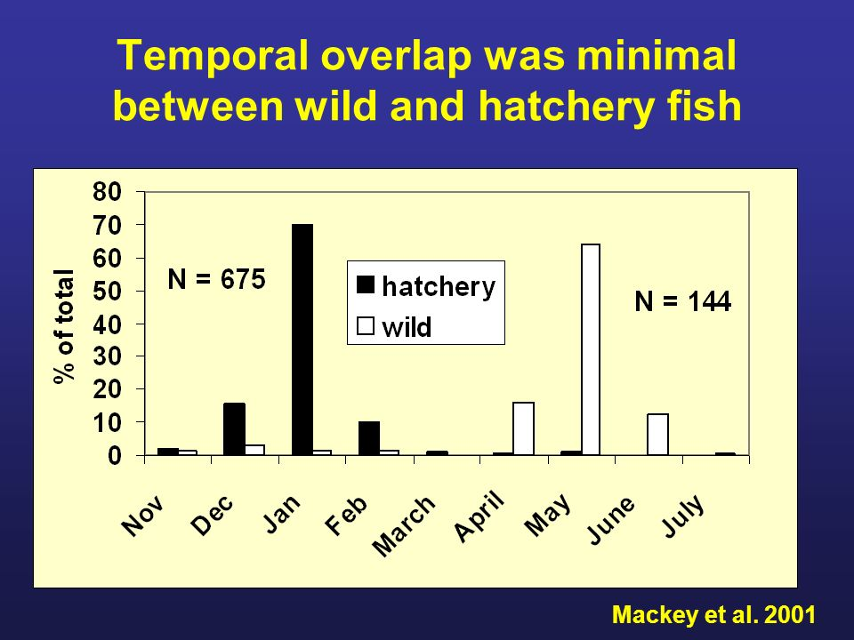 Temporal overlap was minimal between wild and hatchery fish Mackey et al. 2001