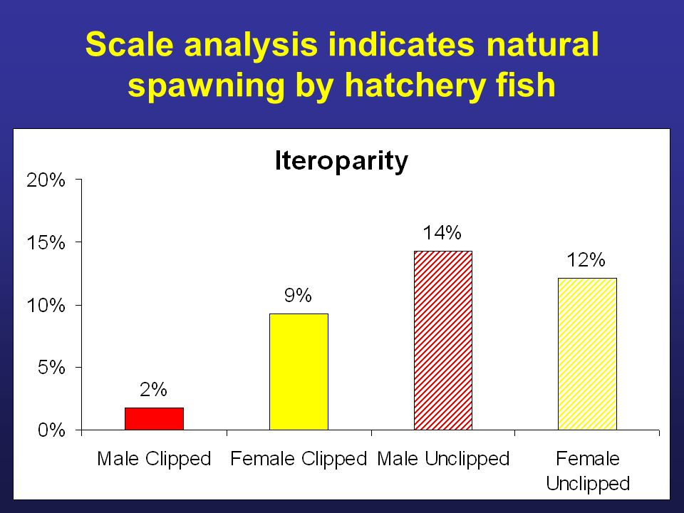 Scale analysis indicates natural spawning by hatchery fish