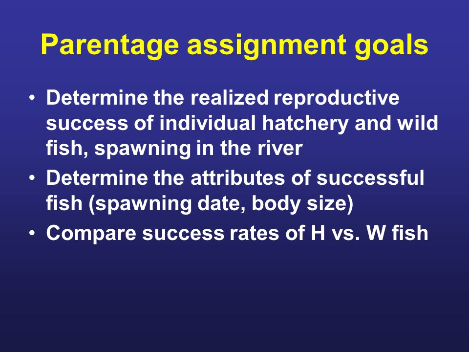 Parentage assignment goals Determine the realized reproductive success of individual hatchery and wild fish, spawning in the river Determine the attributes of successful fish (spawning date, body size) Compare success rates of H vs.
