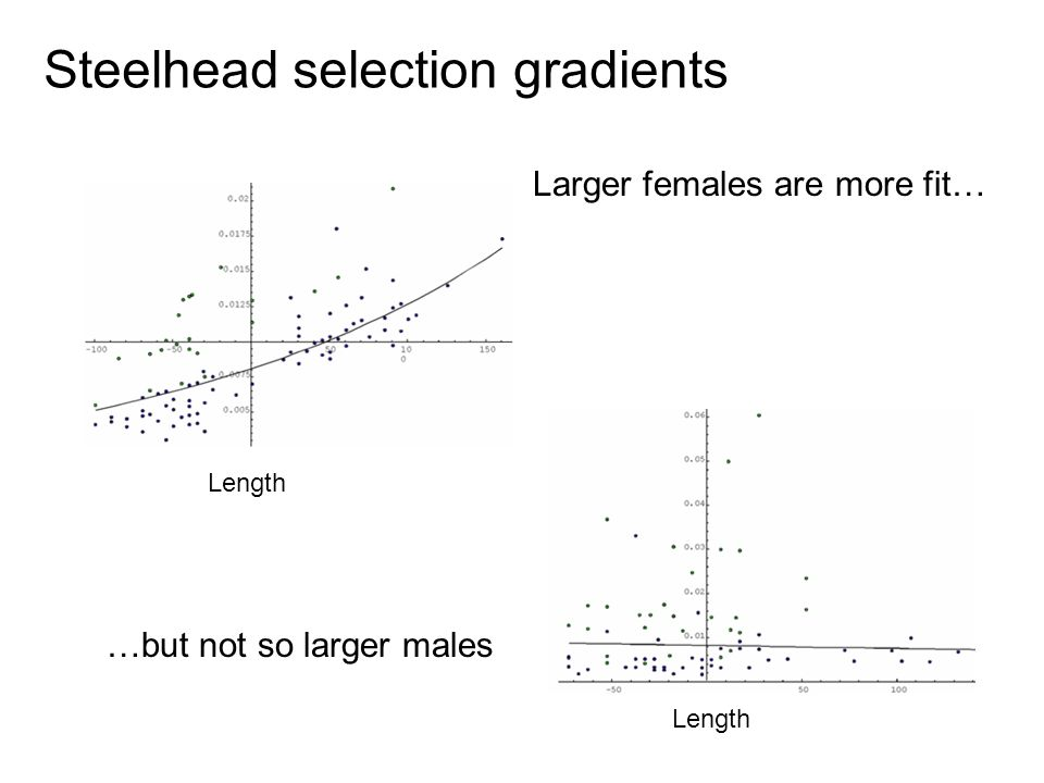 Steelhead selection gradients Length Larger females are more fit… …but not so larger males