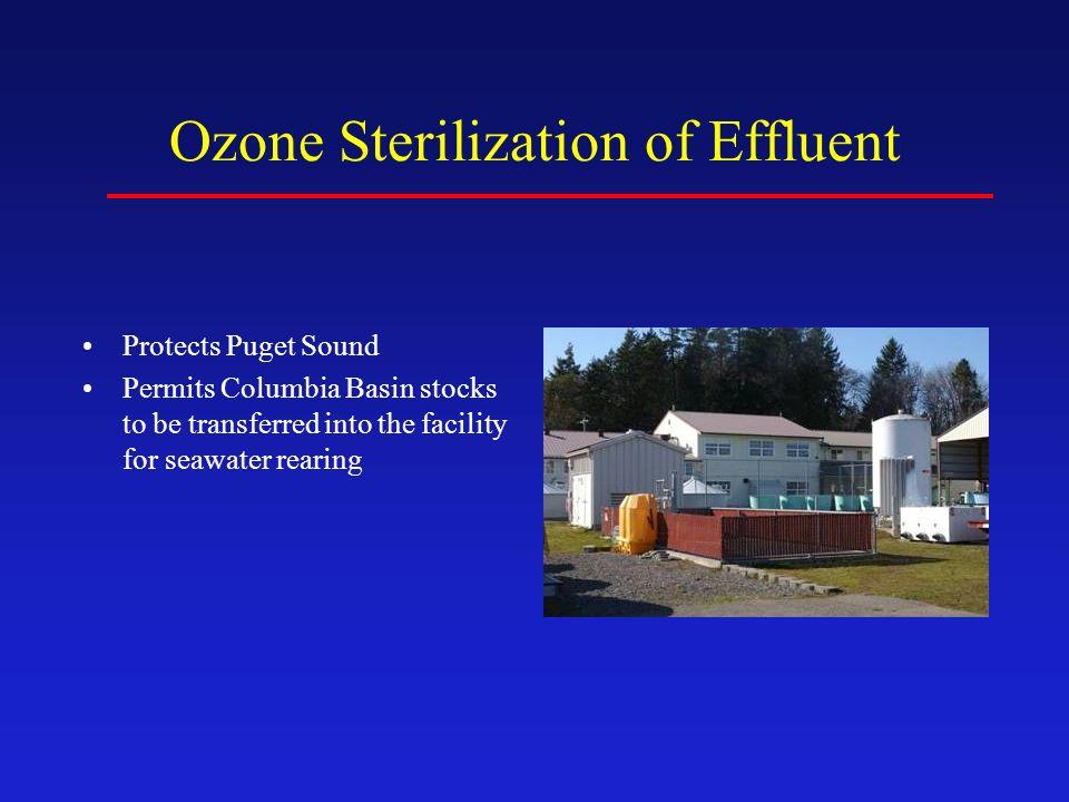 Ozone Sterilization of Effluent Protects Puget Sound Permits Columbia Basin stocks to be transferred into the facility for seawater rearing