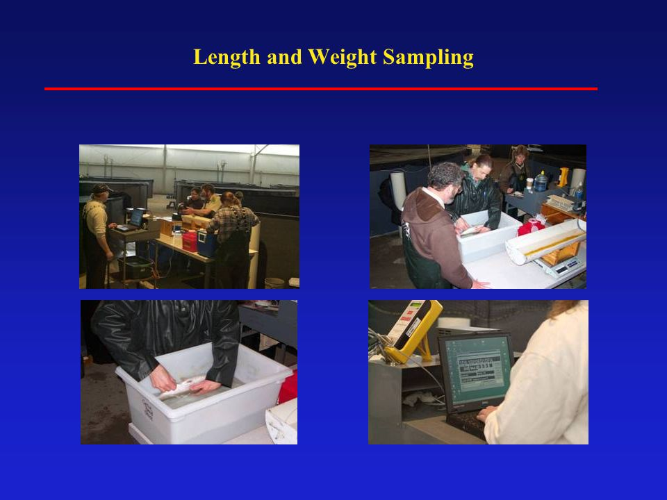 Length and Weight Sampling