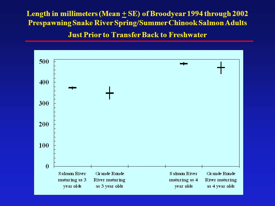 Length in millimeters (Mean + SE) of Broodyear 1994 through 2002 Prespawning Snake River Spring/Summer Chinook Salmon Adults Just Prior to Transfer Ba
