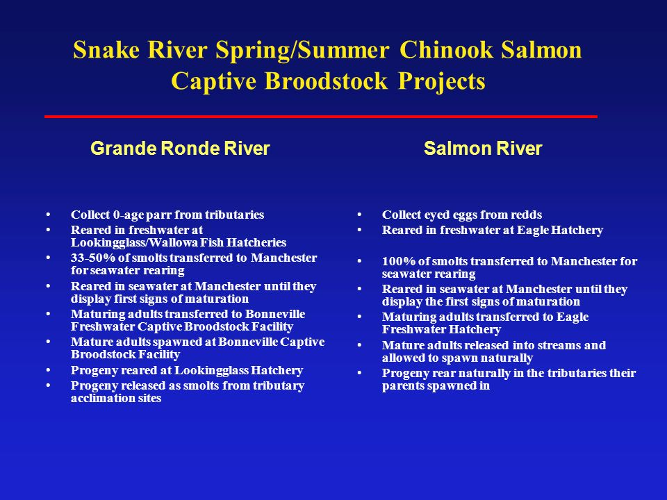 Snake River Spring/Summer Chinook Salmon Captive Broodstock Projects Collect 0-age parr from tributaries Reared in freshwater at Lookingglass/Wallowa