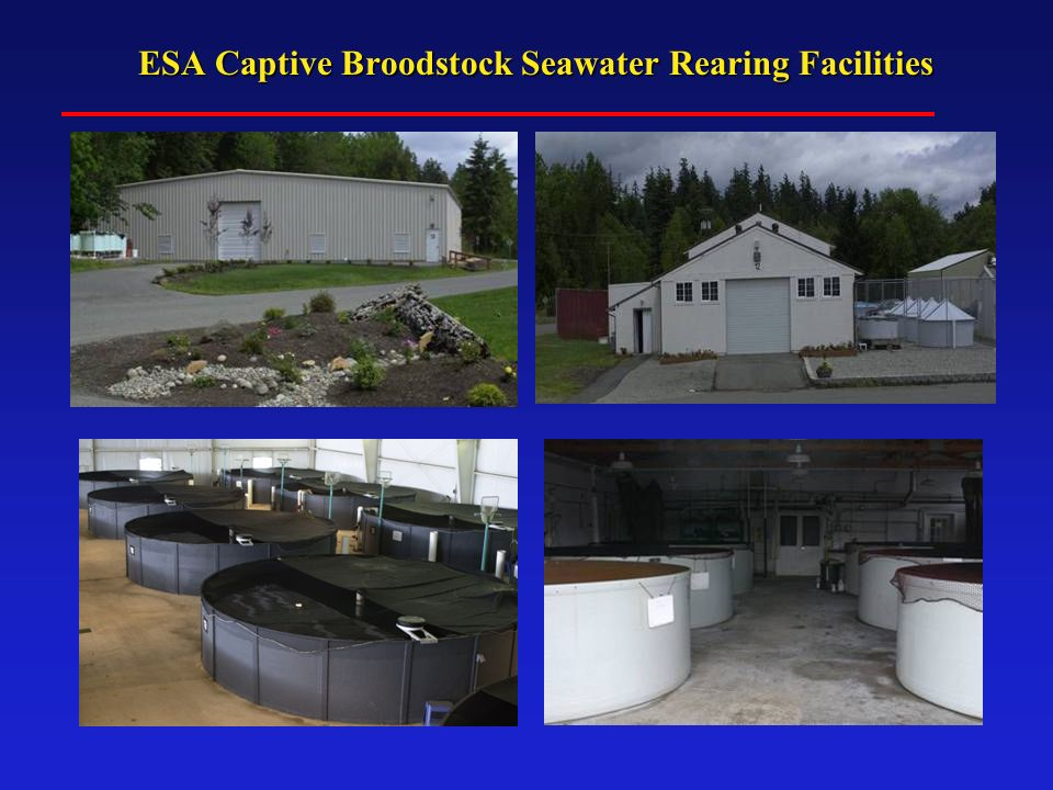 ESA Captive Broodstock Seawater Rearing Facilities