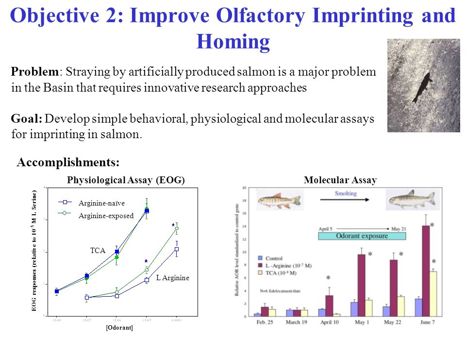 Objective 2: Improve Olfactory Imprinting and Homing Problem: Straying by artificially produced salmon is a major problem in the Basin that requires i