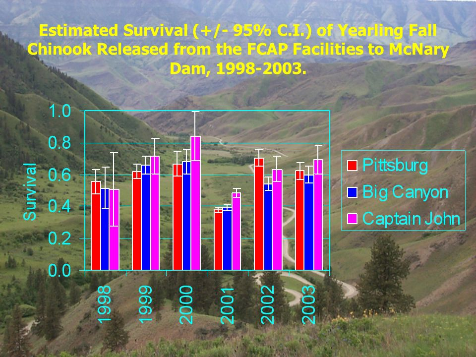 Estimated Survival (+/- 95% C.I.) of Yearling Fall Chinook Released from the FCAP Facilities to McNary Dam, 1998-2003.