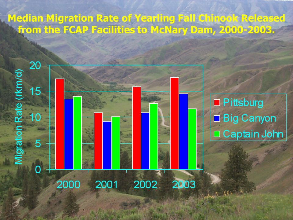 Median Migration Rate of Yearling Fall Chinook Released from the FCAP Facilities to McNary Dam, 2000-2003.