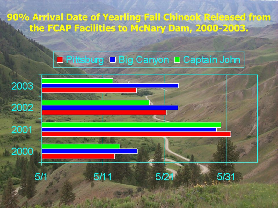 90% Arrival Date of Yearling Fall Chinook Released from the FCAP Facilities to McNary Dam, 2000-2003.
