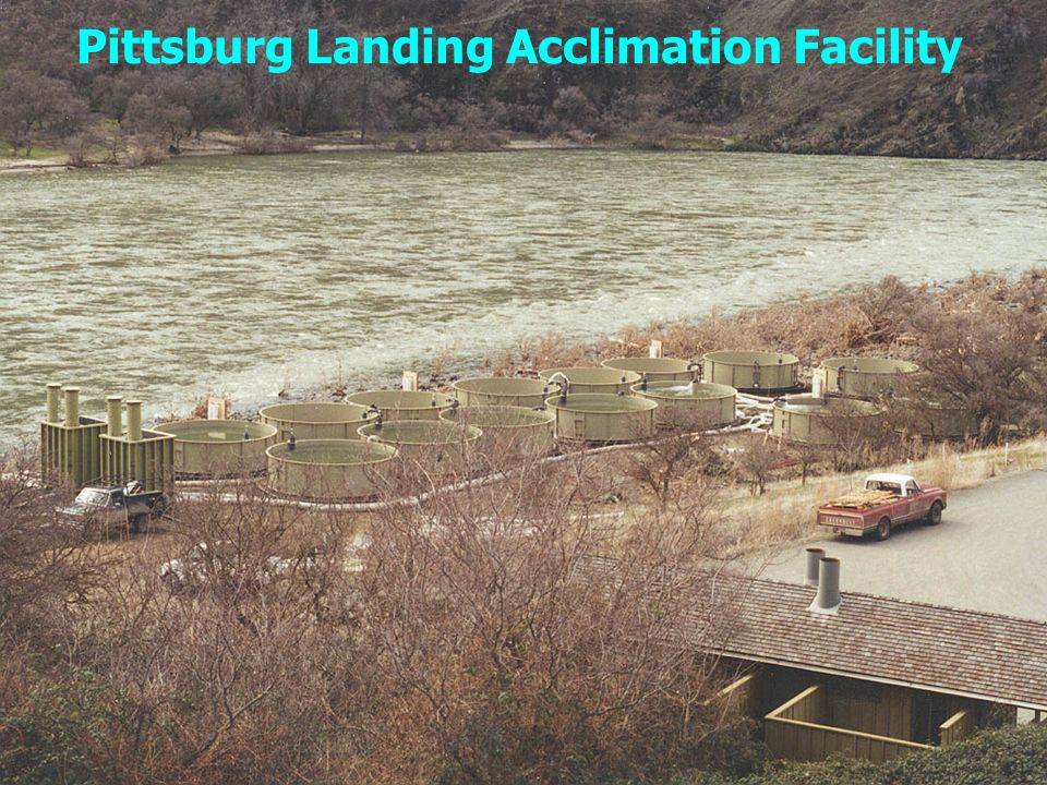 Pittsburg Landing Acclimation Facility