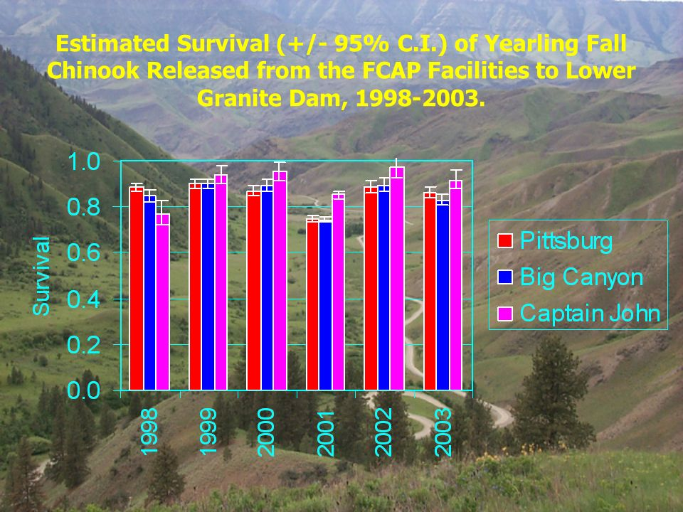 Estimated Survival (+/- 95% C.I.) of Yearling Fall Chinook Released from the FCAP Facilities to Lower Granite Dam, 1998-2003.