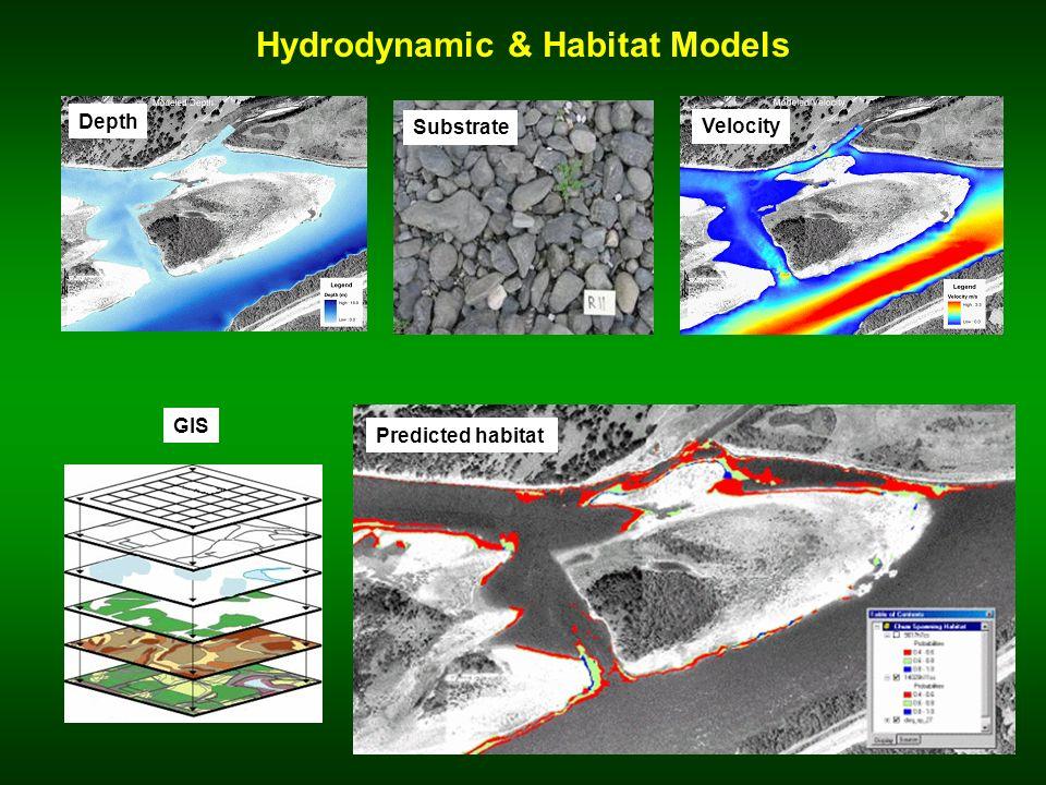 Hydrodynamic & Habitat Models Depth Velocity Substrate GIS Predicted habitat