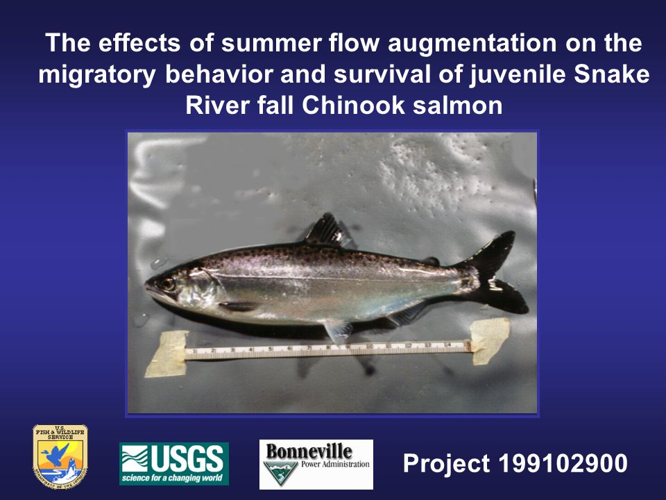 The effects of summer flow augmentation on the migratory behavior and survival of juvenile Snake River fall Chinook salmon Project 199102900