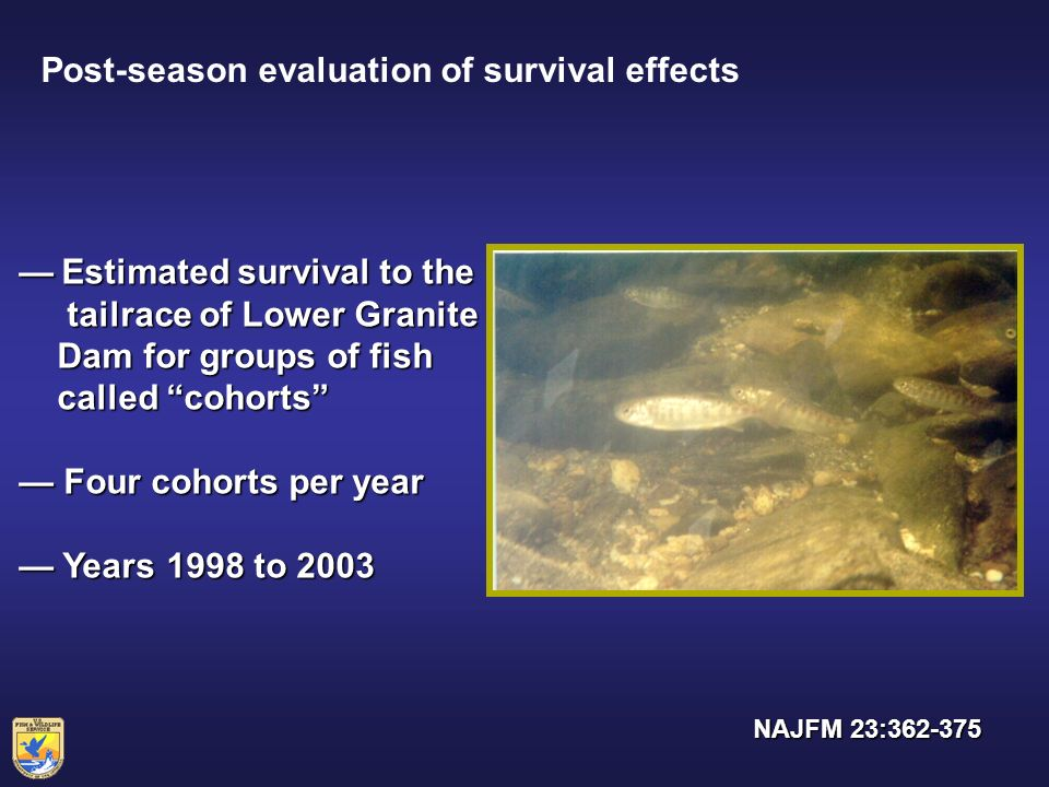 Post-season evaluation of survival effects Estimated survival to the Estimated survival to the tailrace of Lower Granite tailrace of Lower Granite Dam for groups of fish Dam for groups of fish called cohorts called cohorts Four cohorts per year Four cohorts per year Years 1998 to 2003 Years 1998 to 2003 NAJFM 23:362-375