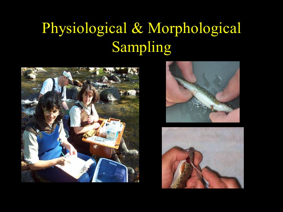 Physiological & Morphological Sampling