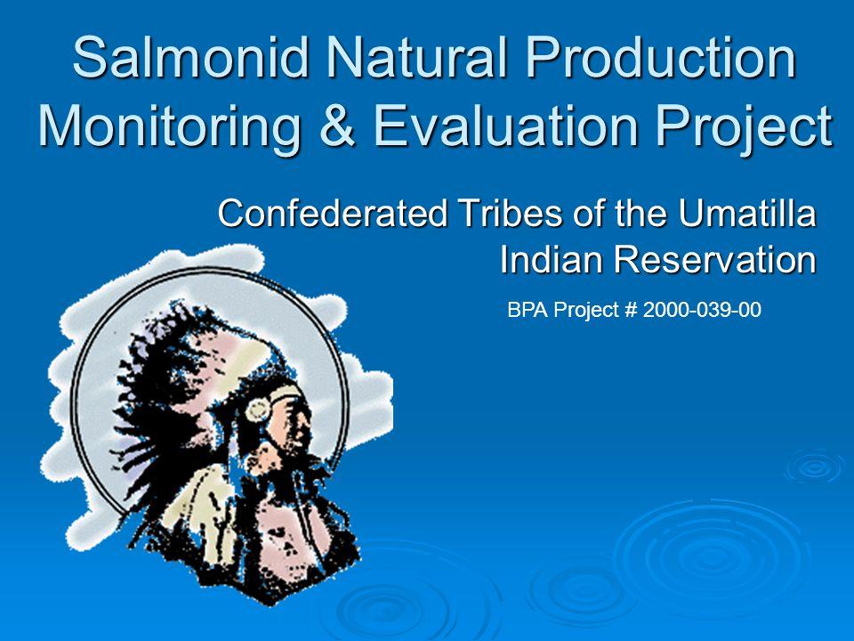 Chinook Survey Methods