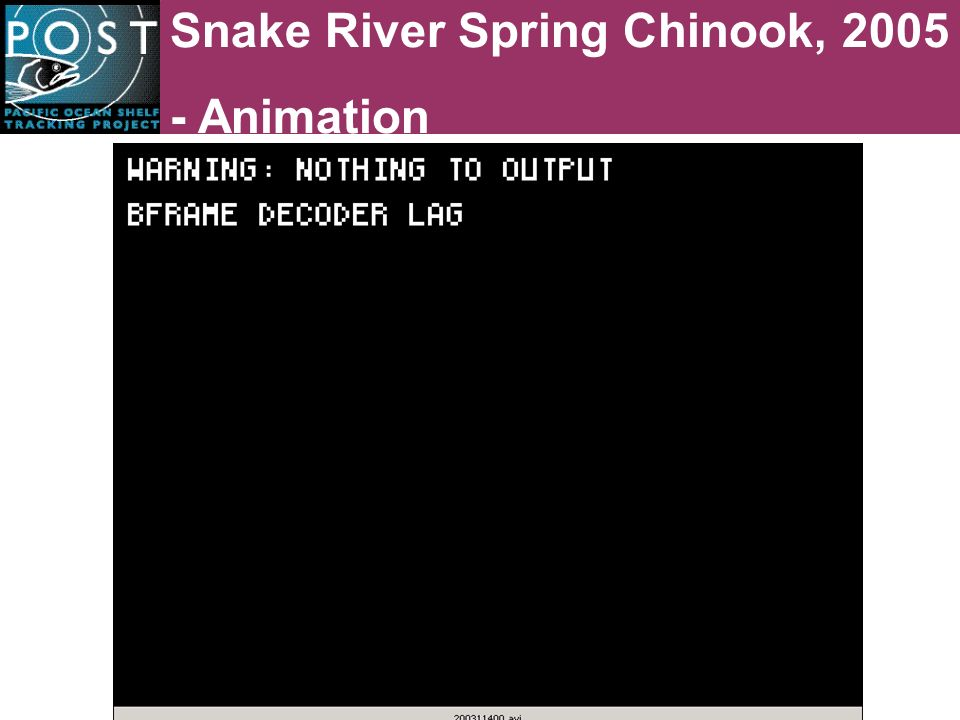 Snake River Spring Chinook, 2005 - Animation
