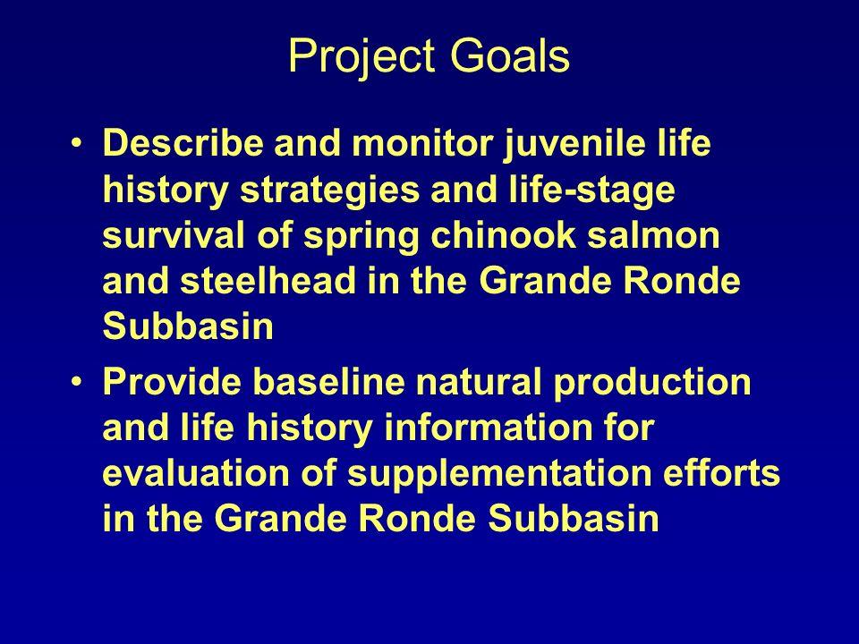 Winter Concealment Spring Chinook Salmon Catherine Creek