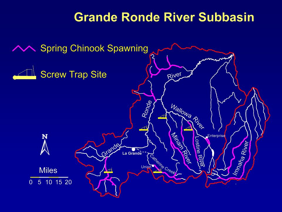 Egg to Smolt Survival Spring Chinook Salmon Lostine River