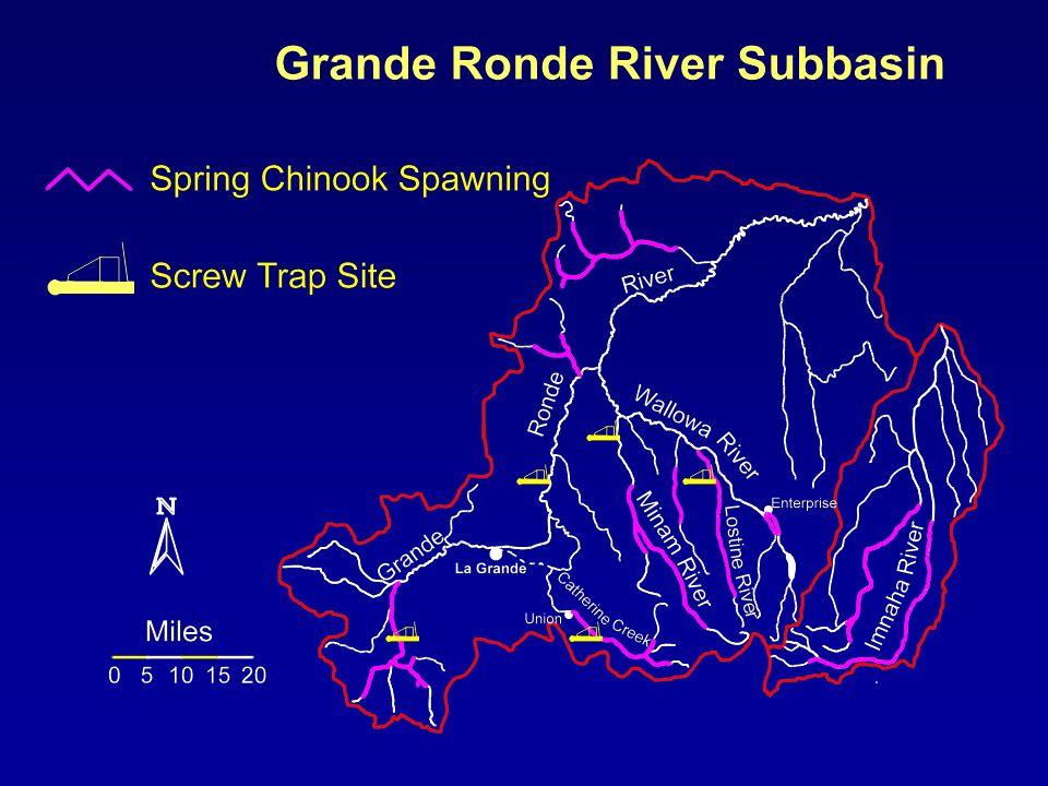 Migration Timing and Abundance Spring Chinook Salmon Catherine Creek