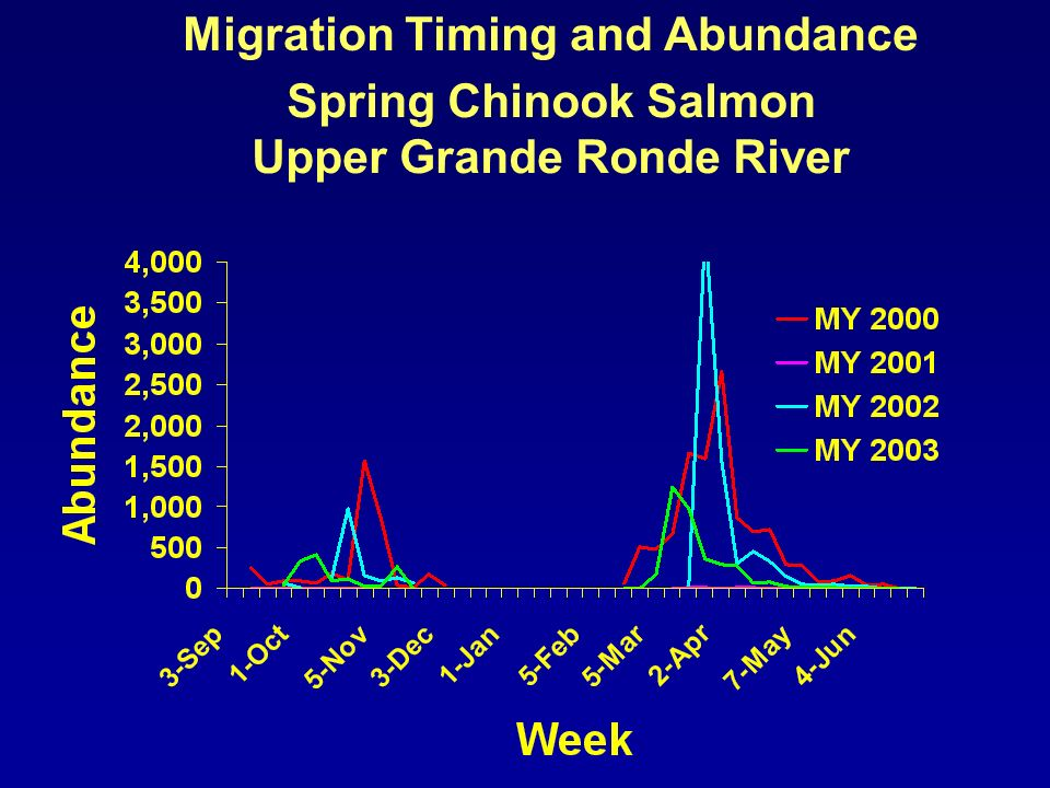 Migration Timing and Abundance Spring Chinook Salmon Upper Grande Ronde River