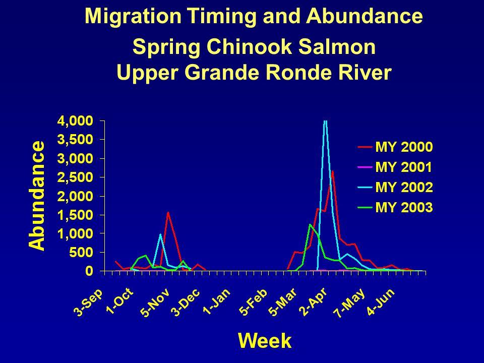 Migration Timing and Abundance Steelhead Lostine River