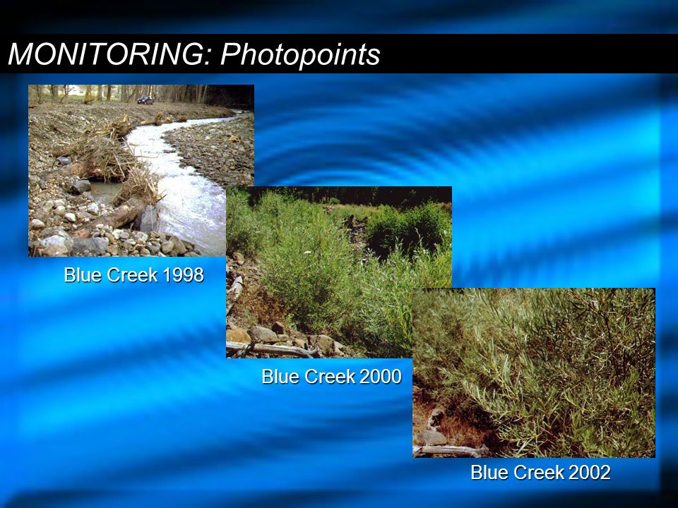 MONITORING: Photopoints Blue Creek 1998 Blue Creek 2002 Blue Creek 2000