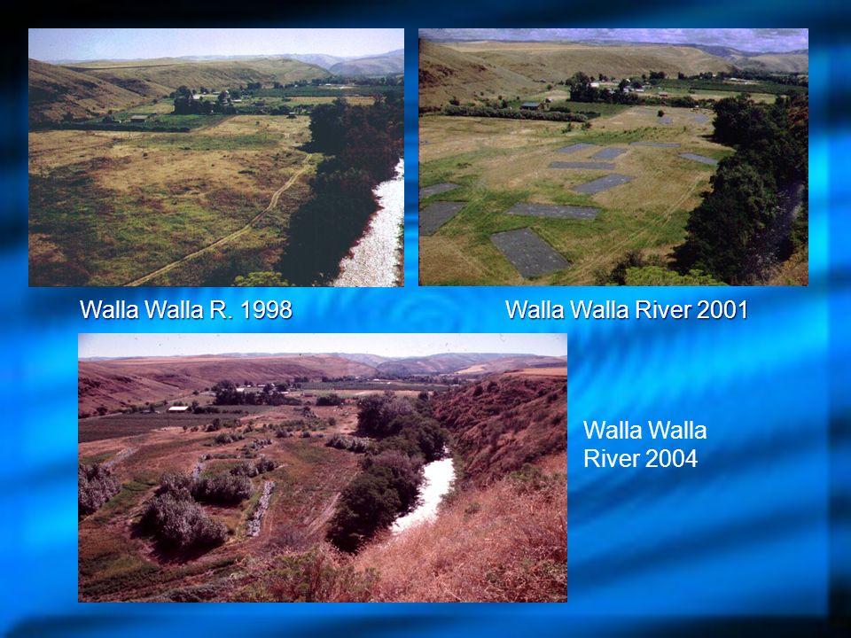 Walla Walla R. 1998 Walla Walla River 2001 Walla Walla River 2004